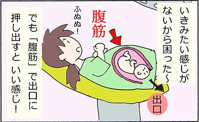 胎盤1.jpg